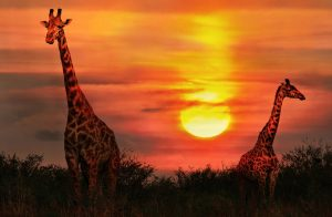 organisateur-voyage-safari-caracom