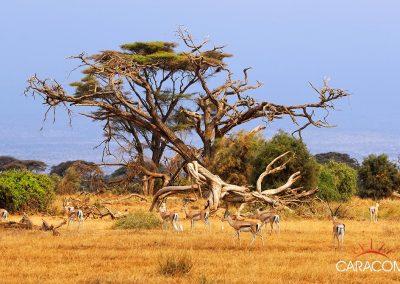 voyage-afrique-decouverte