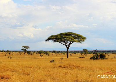 voyage-decouverte-plaine-d'afrique