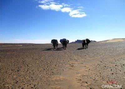 voyage-organise-desert-balade