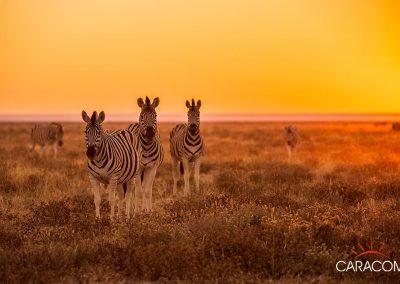 voyage-safari-afrique