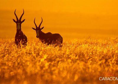 voyage-safari-decouverte