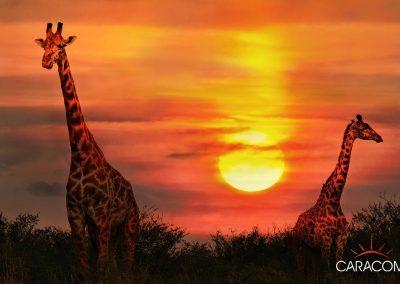 voyage-safari-decouvrte-animaux